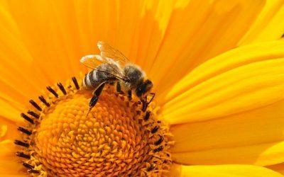 Alergia a las picaduras de abejas y avispas
